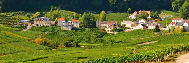 00-cramant-vignoble-crdit-photo-crtca.jpg
